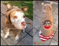 Smilin' Sweet Chimp Hoodie Dog Sweater